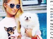 Nina wears nina abiti luxury cani alla moda