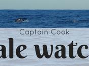 Whale watching Sydney: esperienza