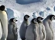Strage pinguini Antartide, morti fame migliaia causa cambiamenti climatici