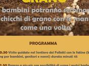 Seminare grano folletti bosco Urbania