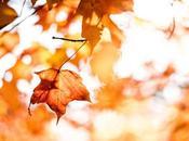 meraviglia novembre