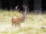 Dove ascoltare bramito cervo Trentino
