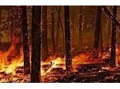 MILANO. Ieri giornata della Festa degli alberi: 2017 bruciati 4.300 ettari.