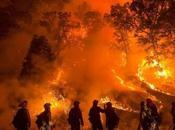 incendi boschivi Puglia 2017