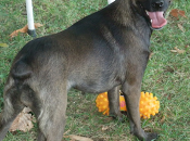 cane, compagno vita