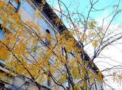 Fall foliage York: colori dell'autunno nella Grande Mela