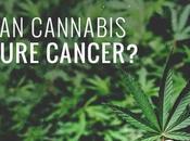 Cannabis cura tumori: ricerca italiana