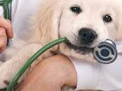 responsabilita' veterinario