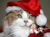 White merry christmas