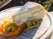 Morlacco Bastardo, formaggi malga Monte Grappa