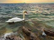 Baia Delle Sirene Lago Garda
