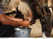 MLIEKOŽene pocedile mliekotou skliedo šoroko,so pos...