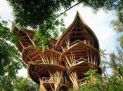 mille utilizzi Bambù Gigante