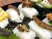 Novel food: l'ok dell'UE agli insetti tavola!