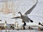 Come aiutare uccellini d'inverno