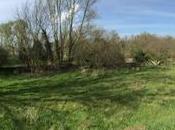 Album: vecchio acquedotto Boara Polesine nella golena fiume Adige
