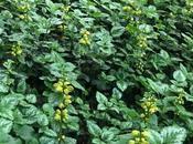 #fioridivenerdì- Fedeli fioriture sottobosco