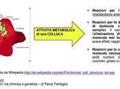 Antiossidanti radicali liberi: chimica genetica