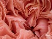 risotto alle rose…. #SEGUILESTAGIONI MAGGIO