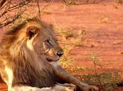 L'ansia: ricerca leone invisibile