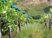 Santa Maria Cedro: l'archeologia coltivazioni frutto sacro