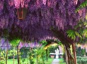 Venezia suoi giardini