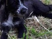 #untesorodicane Appello Melody, cucciolina attesa famiglia tutta