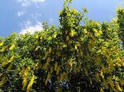 Vegni Chiapparo Alta Borbera (AL)
