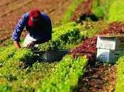 Finanziamenti all'agricoltura, taglia miliardi all'Italia