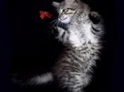 L'enigmaticità gatti