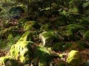 Anche funghi degli alberi patiscono l'inquinamento!