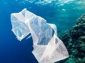 Bottiglie plastica solo, Whatsapp possono segnalare rifiuti mare