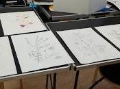 Corso disegno botanico scientifico all'Aia Anita Wallsmit Sachs