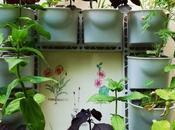 costruire giardini verticali