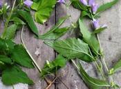 Come prendersi cura pianta prelevata natura