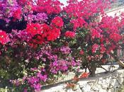 Cipro operazione vacanze!