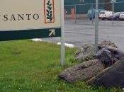 Monsanto: giardiniere malato vince causa legale. Maxi-risarcimento milioni