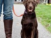 """Passeggiare cane: comando """"piede"""""""