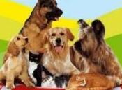 Buona notizia amanti degli animali: cresce numero spiagge libero accesso cani