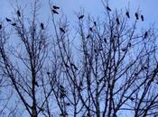 corvi notte. Nadia Agustoni