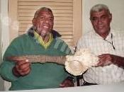 conchiglia degli delle Fiji