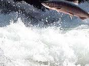 Come salmone: terremoto Giappone agli italo-levantini Bisanzio