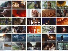 """""""The Tree Life"""""""