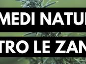 rimedi naturali contro zanzare