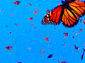 pensieri, quando diventano farfalle