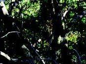 FORESTA MADRE Alberi sapienti, antiche foreste saggio Daniele Zovi