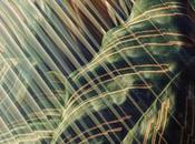 FOTOGRAFIA: piante distorte Matthews