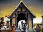 ogni cane cuccia