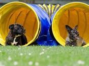 agility: come fare sport proprio cane divertendosi