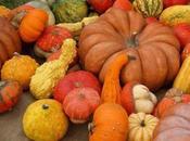 verdura autunnale eccellenza zucca proprietà benefici ricette